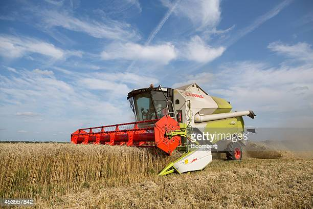 A worker drives a Class KGaA C750 combine harvester across a wheat field during the summer harvest on the OOO Barmino farm enterprise in Vargany near...
