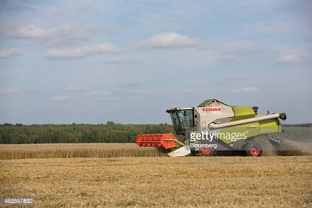 A worker drives a Class KGaA combine harvester across a wheat field during the summer harvest on the OOO Barmino farm enterprise in Vargany near...