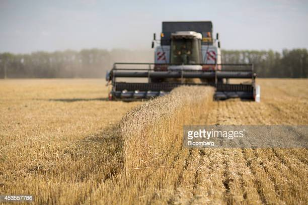 A worker drives a combine harvester across a field of wheat during the summer harvest on the OOO Barmino farm enterprise in Vargany near Nizhny...