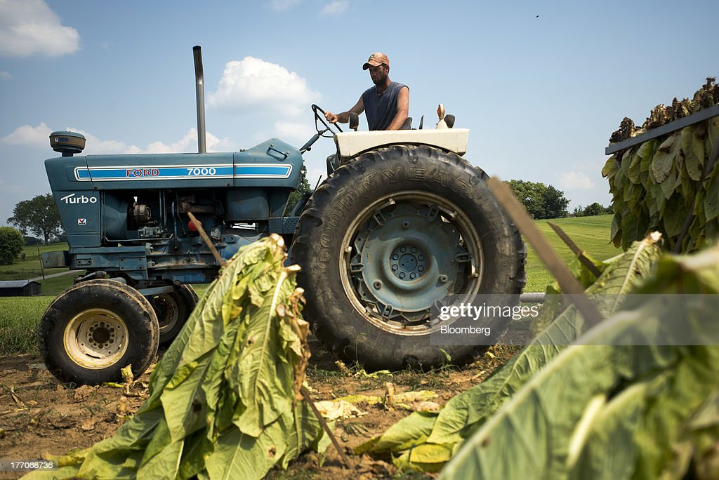 A worker drives a tractor as others hang Burley Tobacco plants on a rail cart after being cut down at the Baldwin Farm in Manchester, Ohio, U.S., on Monday, Aug. 19, 2013. Ohio's debt is headed for its worst annual return since 2008 because of a slump in the value of the state's tobacco bonds. Photographer: Ty Wright/Bloomberg via Getty Images