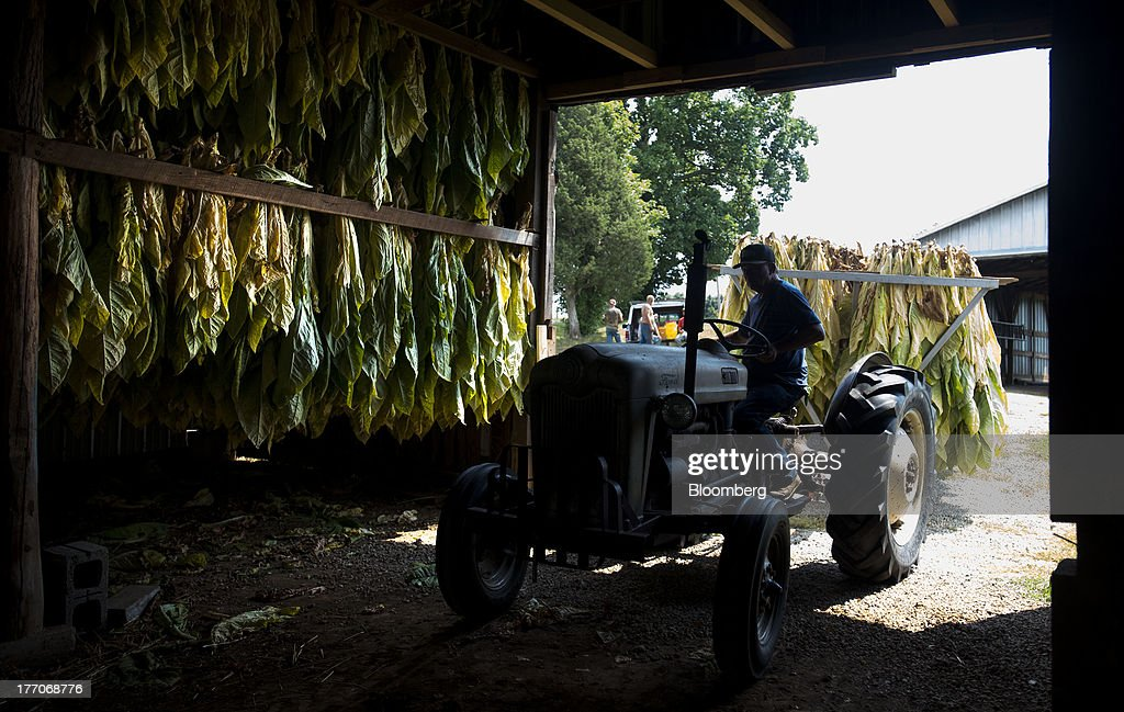 A worker drives in a rail cart full of Burley Tobacco plants to be hung for drying in a barn at the Baldwin Farm in Manchester, Ohio, U.S., on Monday, Aug. 19, 2013. Ohio's debt is headed for its worst annual return since 2008 because of a slump in the value of the state's tobacco bonds. Photographer: Ty Wright/Bloomberg via Getty Images
