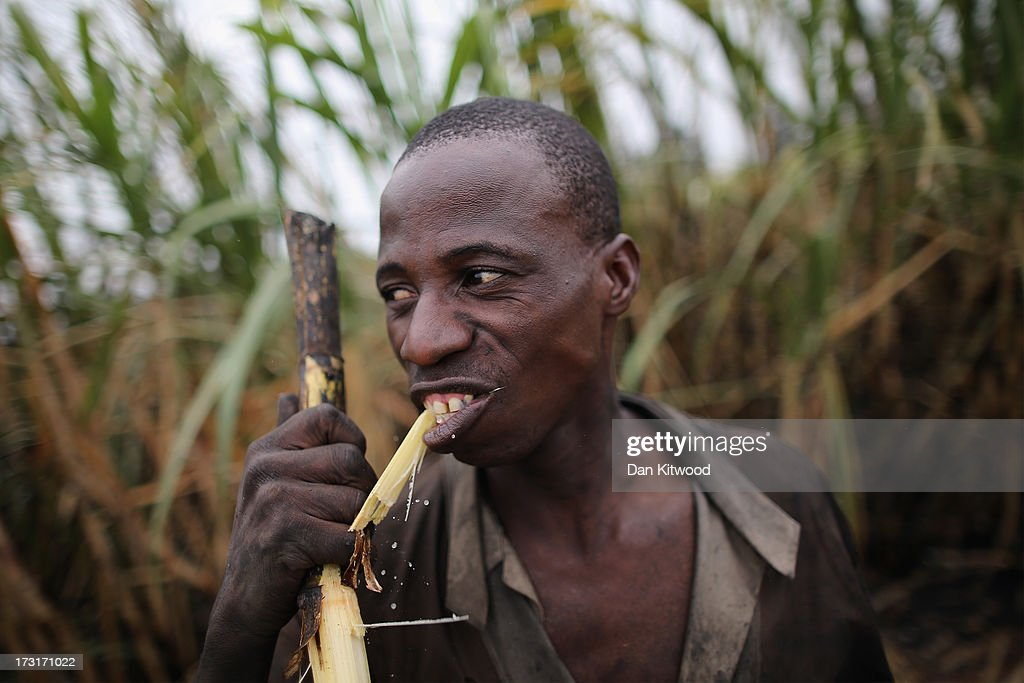 A worker eats sugarcane while on a break in a field near the Kruger National Park on July 8, 2013 in Komatiepoort, South Africa. South Africa is the world's tenth largest producer of sugarcane with growers annually producing an average of 19.9 million tons of sugarcane per year. The participation of black farmers working on sugarcane production is constantly increasing through the development and empowerment of previously disadvantaged people within their communities.