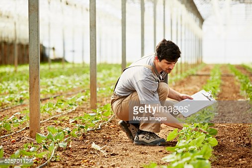 Worker examining plants in greenhouse
