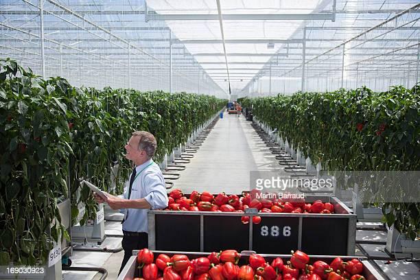 Travailleur examiner produire dans une serre