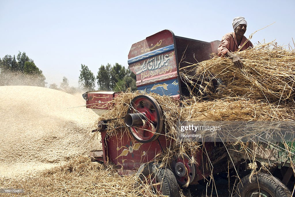 A worker fills a threshing machine with wheat harvested from a field in Monofeya, Egypt, on Sunday, May 19, 2013. Egypt will curb wheat imports by 31 percent to 8 million metric tons in 2012-13, still enough to make it the world's biggest buyer, the U.S. Department of Agriculture estimates. Photographer: Shawn Baldwin/Bloomberg via Getty Images