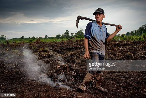 A worker from the clear cut makes his way to Dosan A village of green revolution Dosan produces biofuels such as palm oil in the aim of becoming...