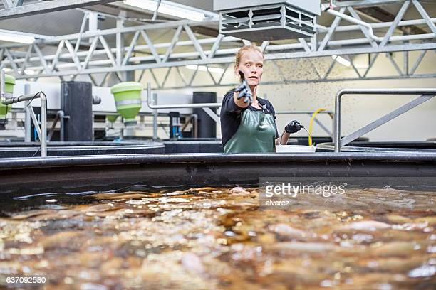 Worker giving food to fishes in tanks