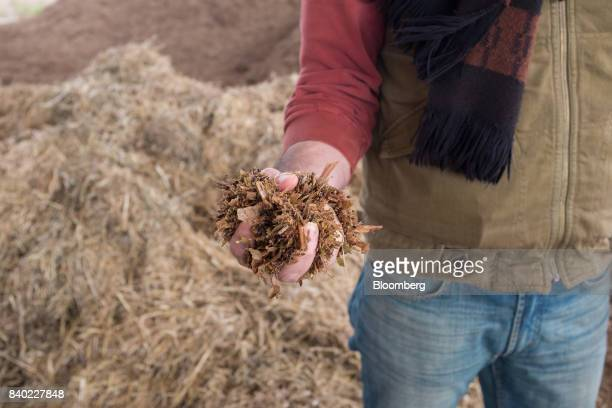 A worker holds feed supplement for a photograph at the Agro Holanda SA feedlot in Zarate Argentina on Monday Aug 7 2017 Argentina a major cow meat...