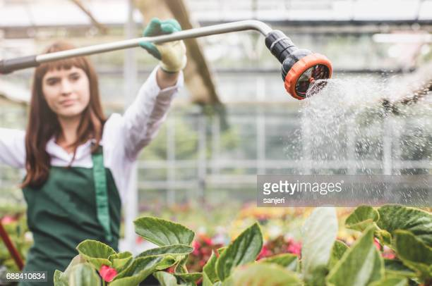 Worker in a Garden Center Manually Watering The Plants