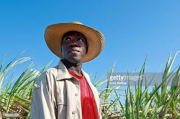 Worker in sugarcane field.