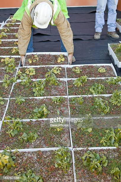 Worker Installing a Green Roof at Commercial Construction Site