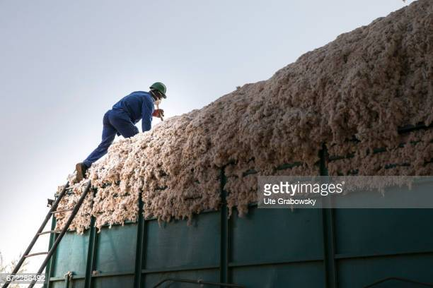 A worker is checking a truck with raw cotton at Faso Coton Here raw cotton is seeded seeds and cotton are separated and will be sold on February 27...