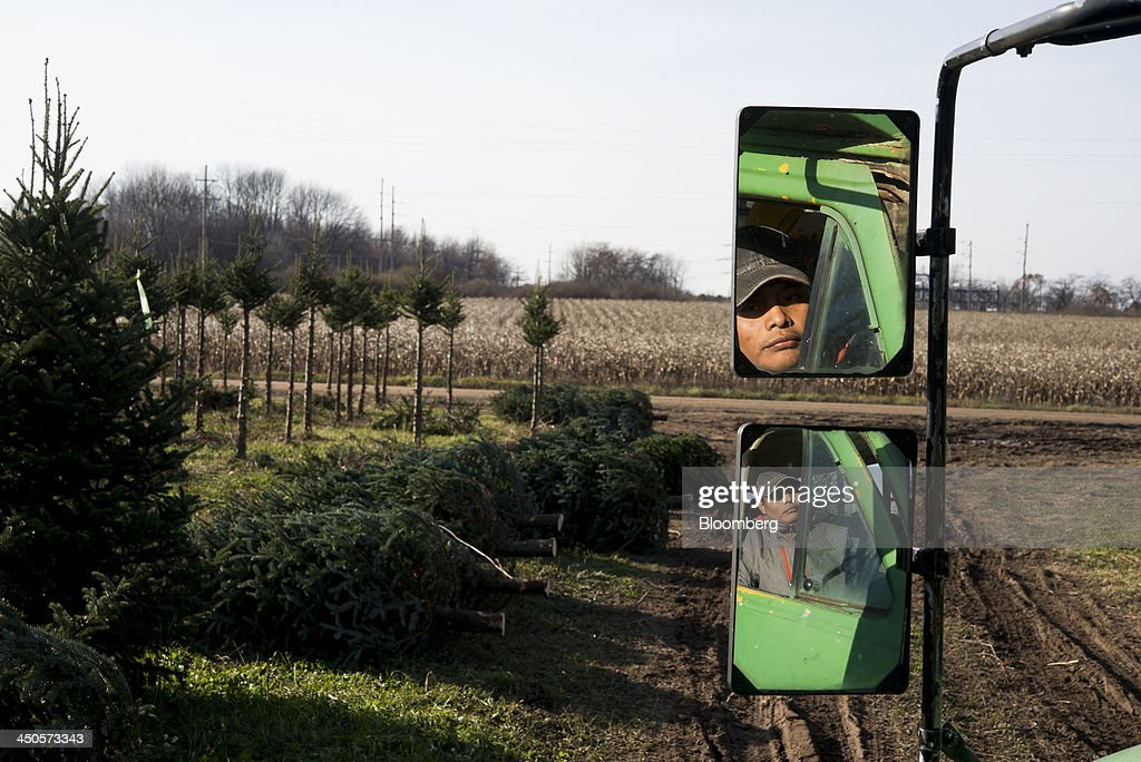A worker is reflected in a mirror as he drives the binding trailer through a field as freshly cut Christmas trees lie on the ground at Mathisen Tree Farms in Greenville, Michigan, U.S., on Thursday, Nov. 14, 2013. With U.S. economic growth trailing the Federal Reserve's projections, shoppers have plenty of reasons to hoard their dollars this holiday season. Photographer: Ty Wright/Bloomberg via Getty Images