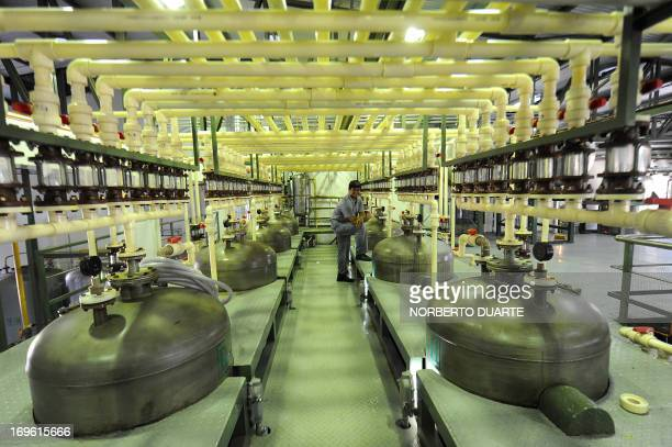 A worker is seen in a processing plant of stevia plants known as 'sweet herb' or 'ka´a he´e' in the native Guarani language in Ypacaray 34 kms of...