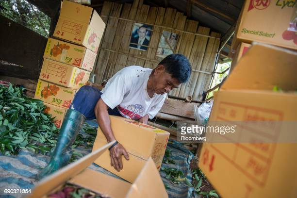 A worker moves a box of harvested lychees at an orchard in the Chai Prakan district of Chiang Mai province Thailand on Saturday May 27 2017...