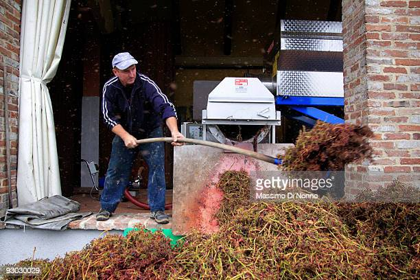 A worker moves small bunches after first milling of clusters on October 6 2009 in Novello near Cuneo Italy Barolo wine is produced in Cuneo province...