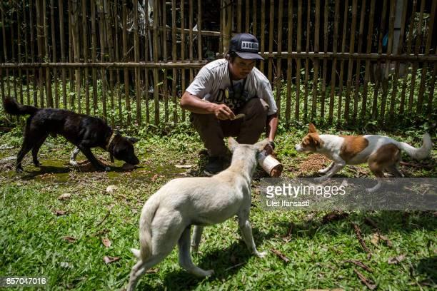 A worker of Jakarta Animal Aid Network feeding abandoned dogs at North Duda village on October 3 2017 in Karangasem regency Island of Bali Indonesia...