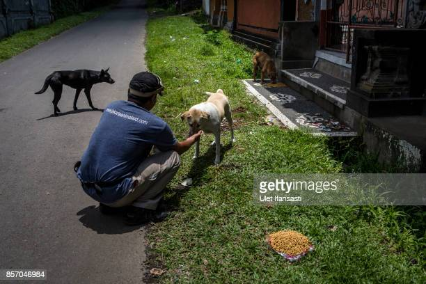 A worker of Jakarta Animal Aid Network feeding an abandoned dog at North Duda village on October 3 2017 in Karangasem regency Island of Bali...