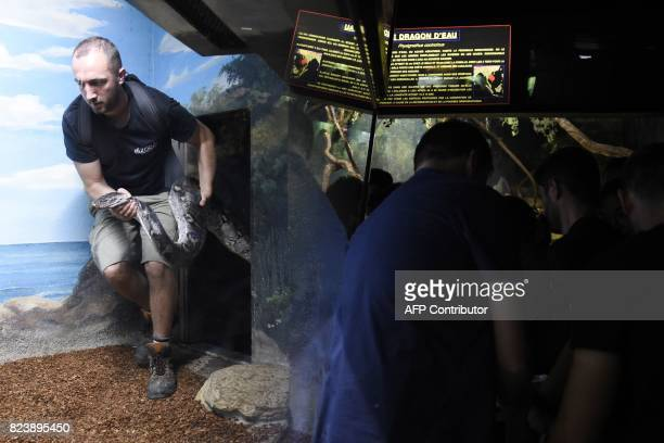 A worker of the Amneville's zoo enters in an enclosure with a reticulated male phyton of 7 meters long and weighing 80 kg upon its arrival on July 28...