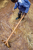 A worker of the Mubuyu Farm coffee factory in Zambia rakes coffee in water to remove red skins from beans Mubuyu farm is the largest producer of...