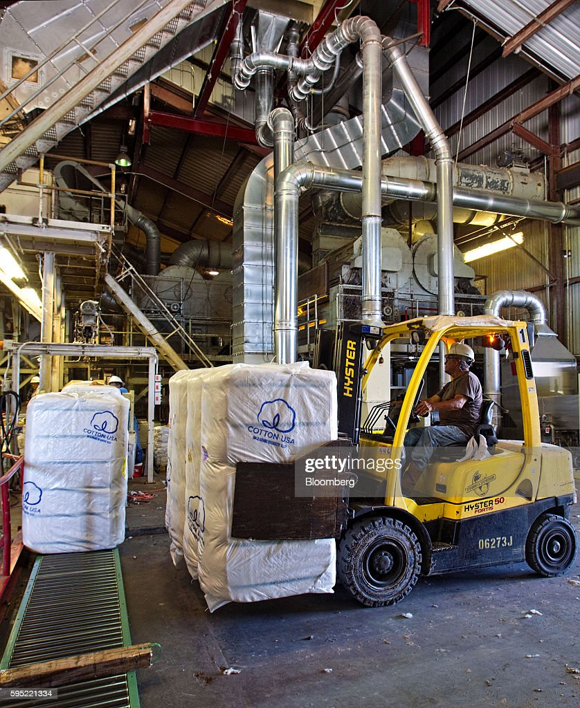 A worker operates a Hyster Co. forklift to move bales of ginned cotton ready for shipment at the Gulf Coast Cooperative gin in the Nueces County of Bishop, Texas, U.S., on Wednesday, Aug. 24, 2016. The United States Department of Agriculture (USDA) estimates US export sales of 18,500 bales for cotton in 2017-2018. Photographer: Eddie Seal/Bloomberg via Getty Images