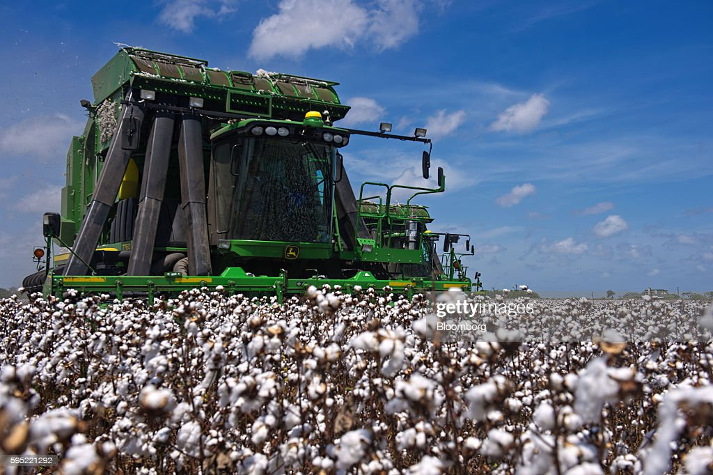 A worker operates a John Deere & Co. cotton picker at Legacy Farms in the Nueces County of Chapman Ranch, Texas, U.S., on Monday, Aug. 22, 2016. The United States Department of Agriculture (USDA) estimates US export sales of 18,500 bales for cotton in 2017-2018. Photographer: Eddie Seal/Bloomberg via Getty Images
