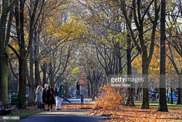 A worker operates a leaf blower as leaves still cling to the trees above on the Commonwealth Avenue Mall in Boston on Dec 6 2017 This year balmy...