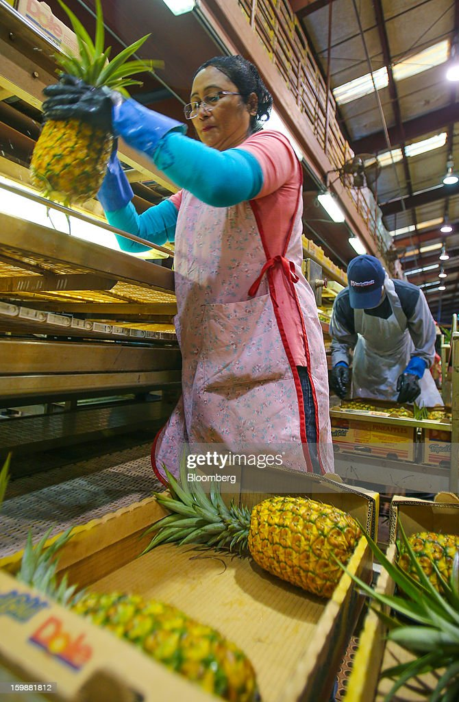 A worker packs whole pineapples for shipment at the Dole Food Company Inc. plantation in Wahiawa, Hawaii, U.S., on Thursday, Jan. 17, 2013. Dole Food Company Inc. has evolved from a Hawaiian pineapple purveyor into the world's largest producer of fresh fruit and vegetables. Photographer: Tim Rue/Bloomberg via Getty Images