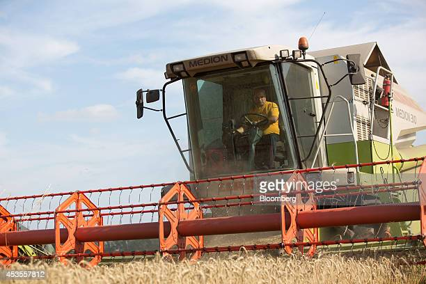 A worker positions a Class KGaA combine harvester on a wheat field during the summer harvest on the OOO Barmino farm enterprise in Vargany near...