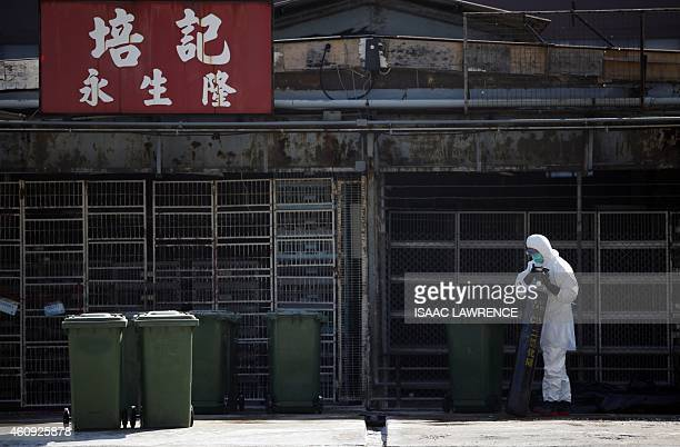 A worker prepares a gas bottle during a chicken cull in Hong Kong on December 31 after the deadly H7N9 virus was discovered in poultry imported from...
