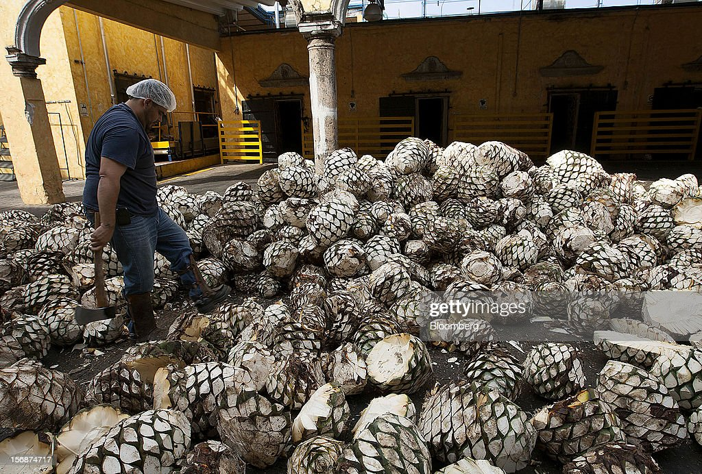 A worker prepares to move tequila agave plant cores, also known as blue agave, to be processed at the Tequila Cuervo La Rojena S.A. de C.V., maker of Jose Cuervo, distillery plant in Guadalajara, Mexico, on Thursday, Nov. 22 2012. There are more than 200 types of agave in Mexico, but use of the blue agave plant was made compulsory in the last century to the issuance of the Official Mexican Standard for Tequila production. Photographer: Susana Gonzalez/Bloomberg via Getty Images