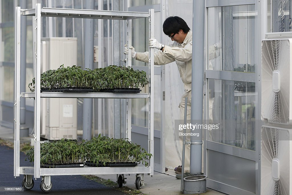 A worker pushes a trolley of grown tomato seedlings into a seedling raising facility at the Plant Factory Center at Chiba University's Kashiwanoha campus in Kashiwa City, Chiba Prefecture, Japan, on Monday, Nov. 12, 2012. Japanese consumers are closing their wallets as the economy's outlook darkens, making it harder for Prime Minister Yoshihiko Noda to stave off the nation's third recession in four years. Photographer: Kiyoshi Ota/Bloomberg via Getty Images