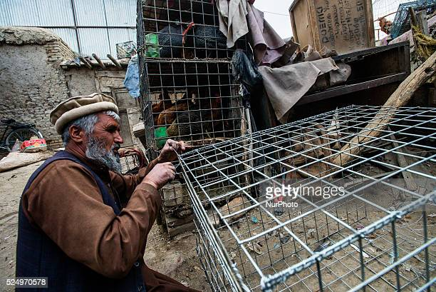 Worker repairs cage at backyard of birds market in Kabul Afghanistan