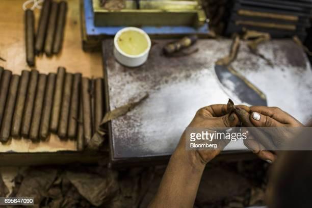 A worker rolls tobacco into a cigar at the Quesada Cigars facility in Santiago de los Caballeros Dominican Republic on Thursday May 4 2017 The...