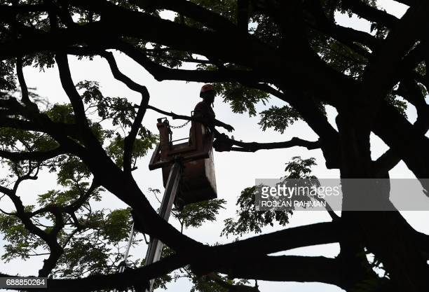 A worker saws off branches from a tree along a street in Singapore on May 27 2017 / AFP PHOTO / ROSLAN RAHMAN