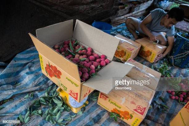 A worker seals boxes of harvested lychees at an orchard in the Chai Prakan district of Chiang Mai province Thailand on Saturday May 27 2017...