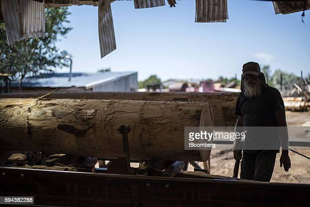 A worker secures a log into place at the Spotted Owl Timber Inc mill in Santa Fe New Mexico US on Monday Aug 15 2016 Founded in 1991 the family owned...
