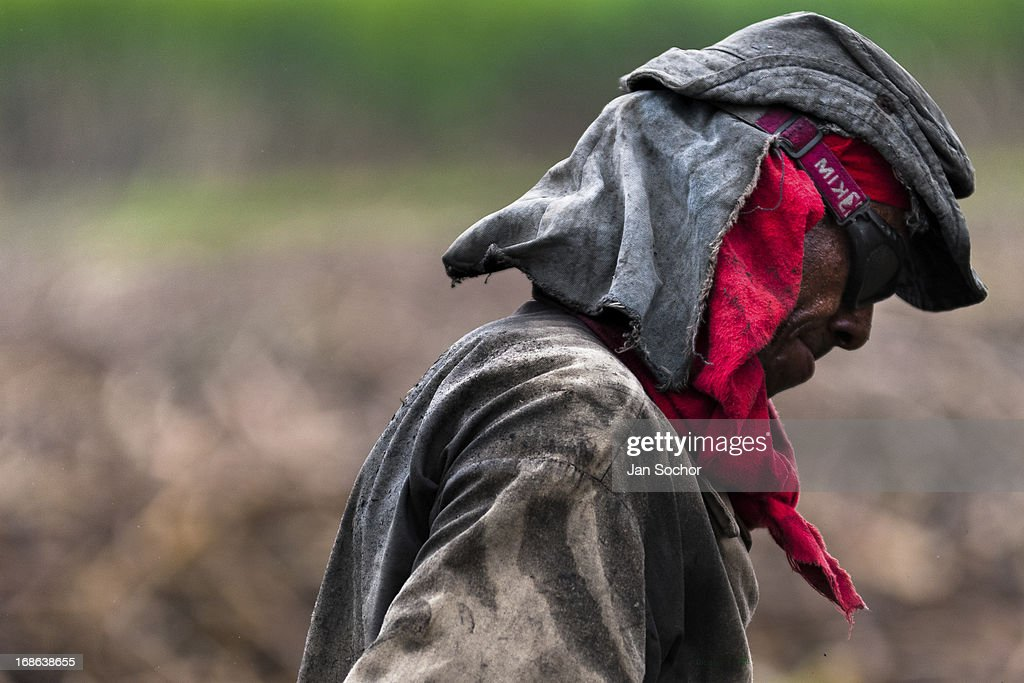A worker seen on a sugar cane plantation near Florida on 25 May 2012 in Florida Valle del Cauca Colombia The Cauca River valley is the booming centre...