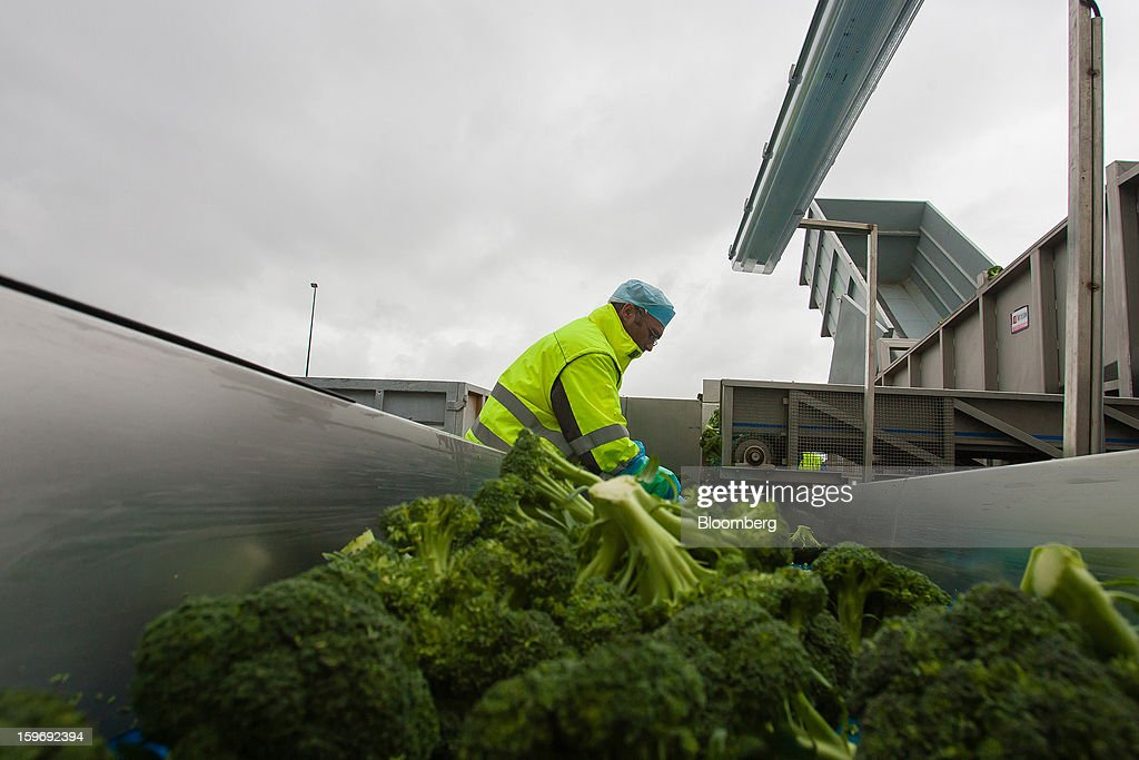 A worker separates broccoli plants in a trailer at the Monliz-Produtos Alimentares do Mondego e Liz SA frozen food factory in Alpiarca, Portugal, on Friday, Jan. 18, 2013. Portuguese Prime Minister Pedro Passos Coelho says he does not want Portugal to get a second rescue program. Photographer: Mario Proenca/Bloomberg via Getty Images