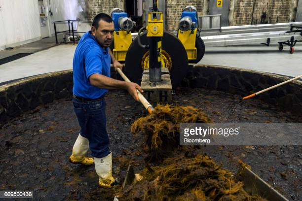 A worker shovels Weber Blue agave fibers from a Tahona stone mill at the Patron Spirits Co distillery in Atotonilco El Alto Jalisco Mexico on Tuesday...