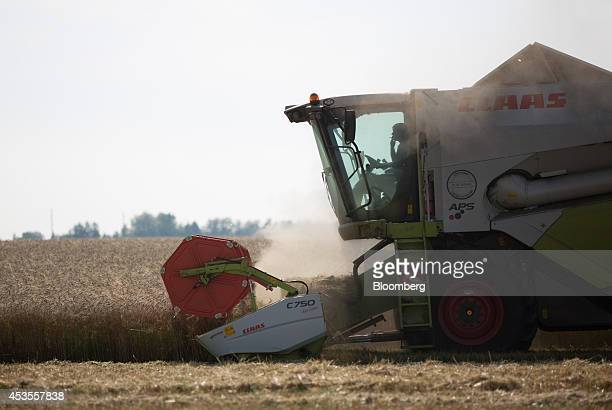 A worker smokes a cigarette in his cab while driving a Class KGaA combine harvester across a wheat field during the summer harvest on the OOO Barmino...