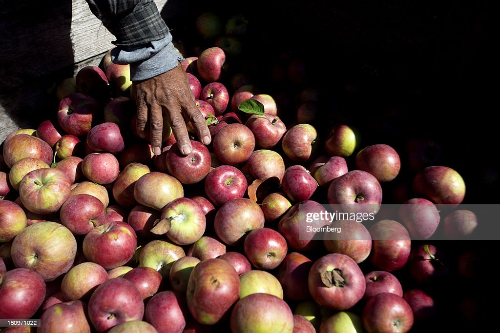 A worker sorts through freshly picked apples in crates at MacQueen Orchards in Holland, Ohio, U.S., on Tuesday, Sept. 17, 2013. Ohio is one of the top ten apple-producing states in the U.S., which overall has about 7,500 apple producers who grow nearly 100 varieties of apples on approximately 363,000 acres, according to the U.S. Apple Association. Photographer: Ty Wright/Bloomberg via Getty Images