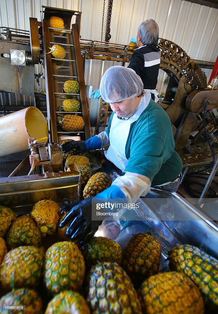 A worker stacks pineapples to be juiced at the Dole Food Company Inc. plantation in Wahiawa, Hawaii, U.S., on Thursday, Jan. 17, 2013. Dole Food Company Inc. has evolved from a Hawaiian pineapple purveyor into the world's largest producer of fresh fruit and vegetables. Photographer: Tim Rue/Bloomberg via Getty Images