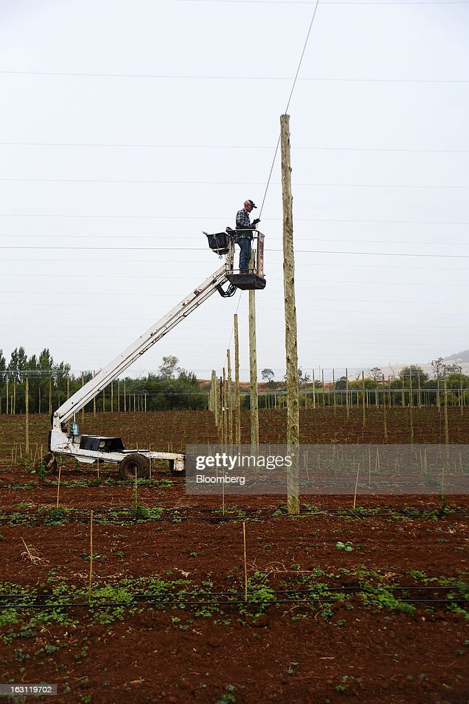 A worker stands on a cherry picker as he repairs support wires for hop plants at Hops Products Australia's operations in Bushy Park, Tasmania, Australia, on Tuesday, Feb. 26, 2013. Australia's Bureau of Statistics is scheduled to release fourth-quarter gross domestic product figures on March 6. Photographer: Carla Gottgens/Bloomberg via Getty Images