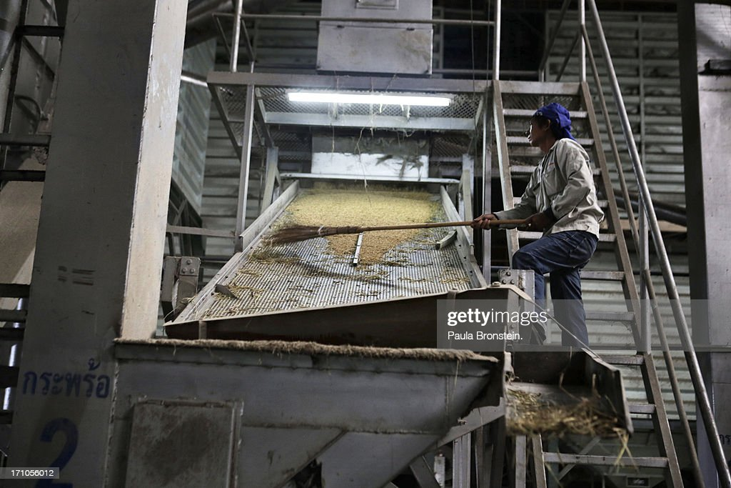 A worker sweeps rice as it moves along on a belt being cleaned at the Settapanich -Samchuk rice mill in on June 20, 2013 in Suphan Buri, Thailand. Thailand plans to sell as much as 7 million metric tons from inventories in order to fund a grain purchase program. Recently financial sources revealed that the actual losses from the government's controversial rice pledging scheme for the 2011-12 rice harvest year are close to reaching 200 billion baht [US$6.5 billion], this is far above the Thai Finance Ministry's earlier forecast of 70-100 billion baht.