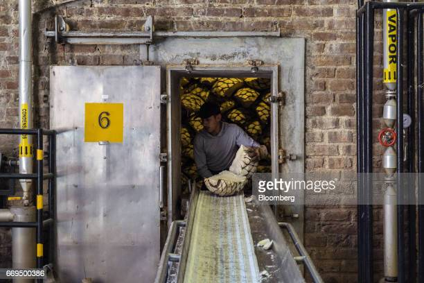 A worker takes Weber Blue agave pine cones called pinas off a conveyor belt at the Patron Spirits Co distillery in Atotonilco El Alto Jalisco Mexico...