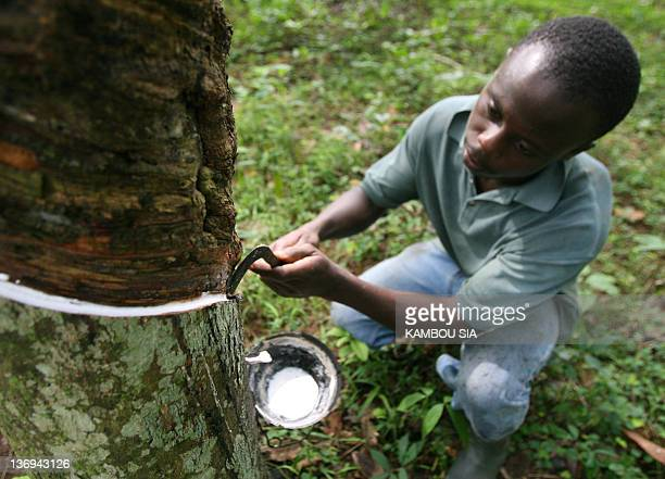A worker taps a rubber tree to collect rubber sap 07 November 2007 in a plantation of heveas in Allokoi village located 5 kilometres from Abidjan...