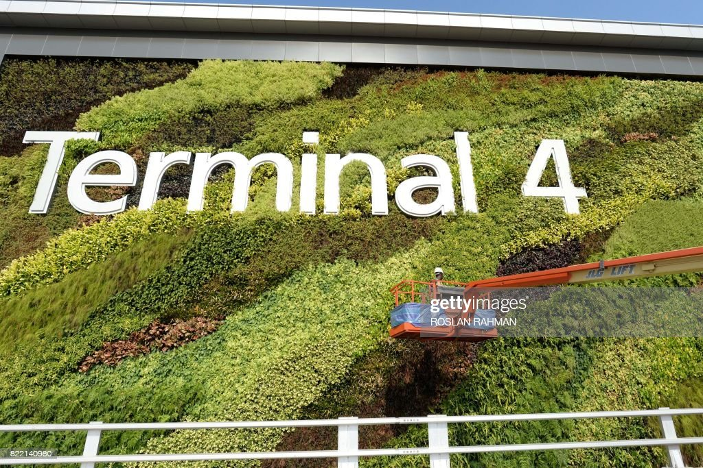A worker tends to wall-hanging plants on the facade of Changi Airport's newly-built Terminal 4 in Singapore on July 25, 2017. Singapore's Changi Airport on July 25 held a media preview of its fourth terminal, which will open at a yet to be announced date later this year. The terminal, which relies heavily on automation and self-service machines, will be able to handle some 16 million passengers a year. /