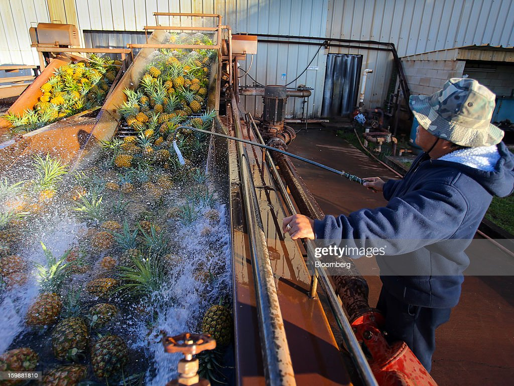 A worker thoroughly washes freshly picked pineapples at the processing plant at the Dole Food Company Inc. plantation in Wahiawa, Hawaii, U.S., on Thursday, Jan. 17, 2013. Dole Food Company Inc. has evolved from a Hawaiian pineapple purveyor into the world's largest producer of fresh fruit and vegetables. Photographer: Tim Rue/Bloomberg via Getty Images