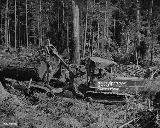 Worker Towing A Tree Trunk In British Columbia In Canada